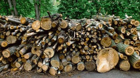 Bomen in Alkmaar worden gekapt door de iepziekte