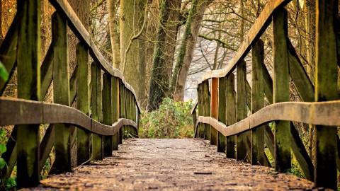 Nederland plant bomen met Staatsbosbeheer