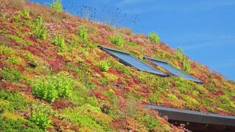 Subsidie voor groene daken in Alkmaar